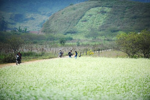 Khám phá Cao nguyên Mộc Châu mùa Hoa cải trắng
